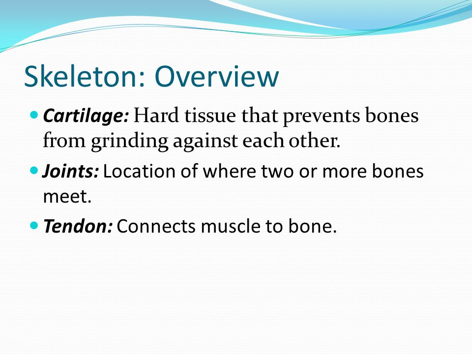 Skeleton: Overview Cartilage: Hard tissue that prevents bones from grinding against each other. Joints: Location of where two or more bones meet. Tend