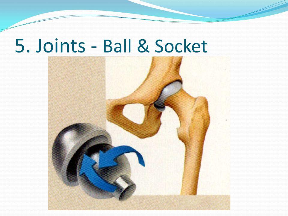 5. Joints - Ball & Socket