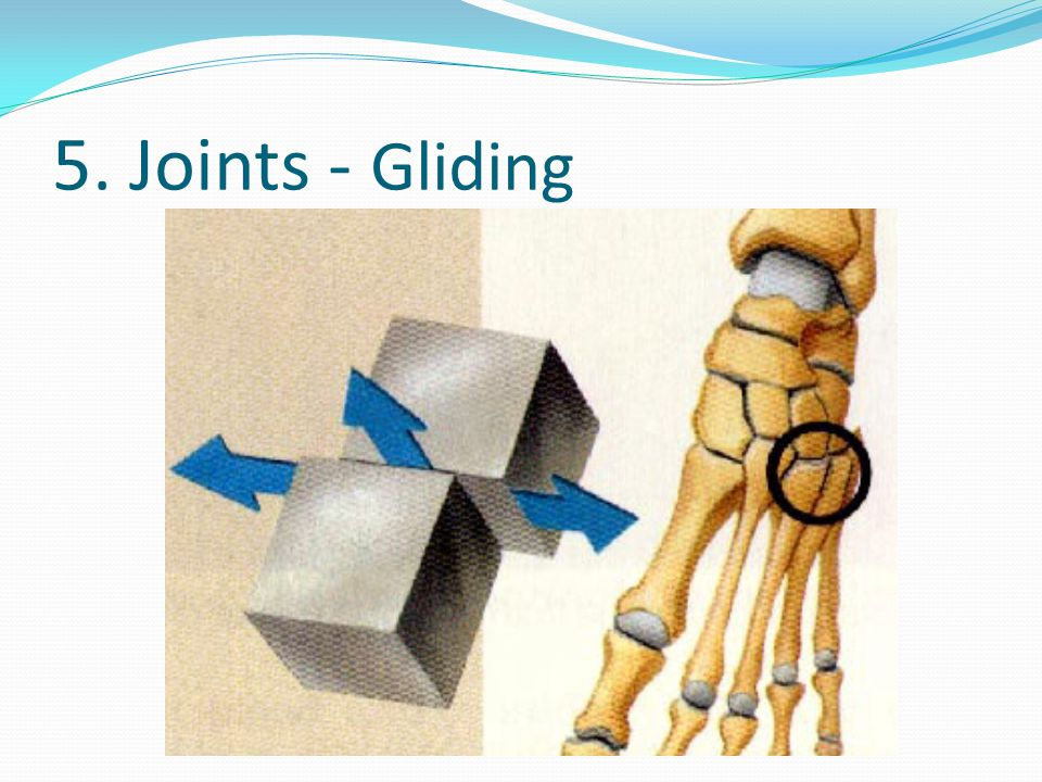 5. Joints - Gliding
