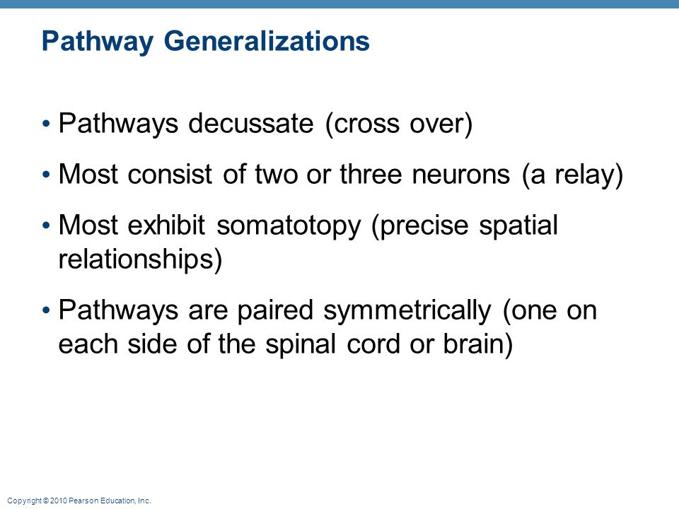 Copyright © 2010 Pearson Education, Inc. Pathway Generalizations Pathways decussate (cross over) Most consist of two or three neurons (a relay) Most e
