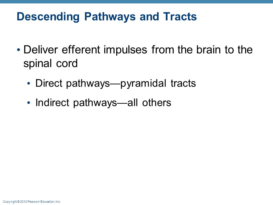 Copyright © 2010 Pearson Education, Inc. Descending Pathways and Tracts Deliver efferent impulses from the brain to the spinal cord Direct pathways—py