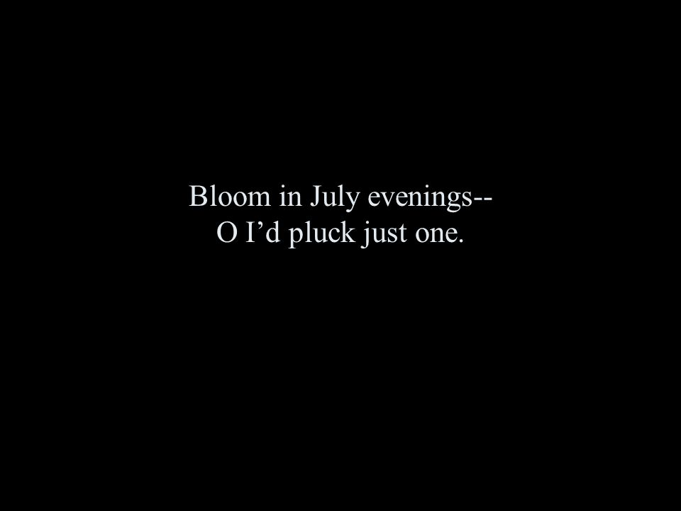Bloom in July evenings-- O I'd pluck just one.