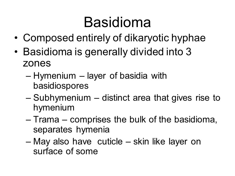Basidioma Composed entirely of dikaryotic hyphae Basidioma is generally divided into 3 zones –Hymenium – layer of basidia with basidiospores –Subhymenium – distinct area that gives rise to hymenium –Trama – comprises the bulk of the basidioma, separates hymenia –May also have cuticle – skin like layer on surface of some