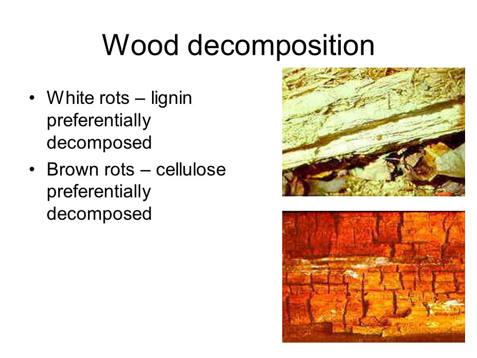 Wood decomposition White rots – lignin preferentially decomposed Brown rots – cellulose preferentially decomposed