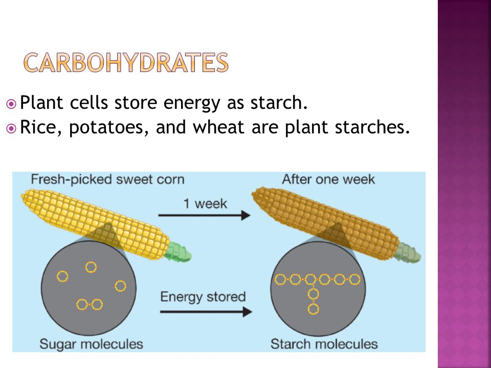  Plant cells store energy as starch.  Rice, potatoes, and wheat are plant starches.