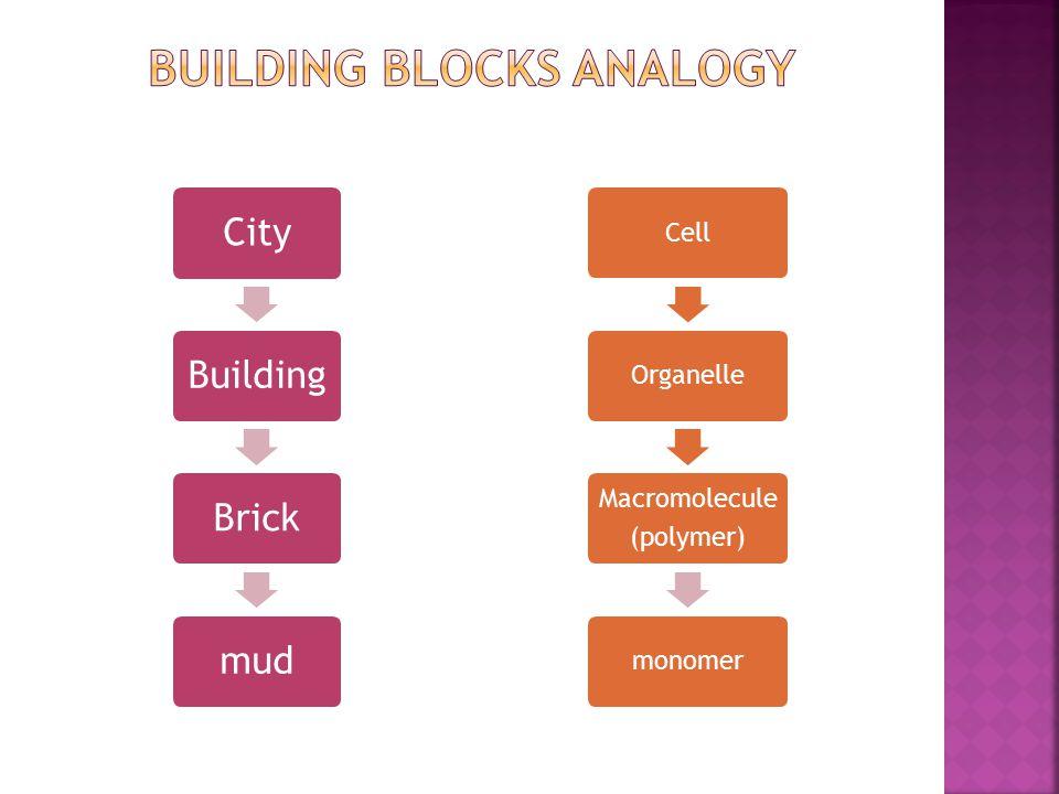 CellOrganelle Macromolecule (polymer) monomer CityBuildingBrickmud