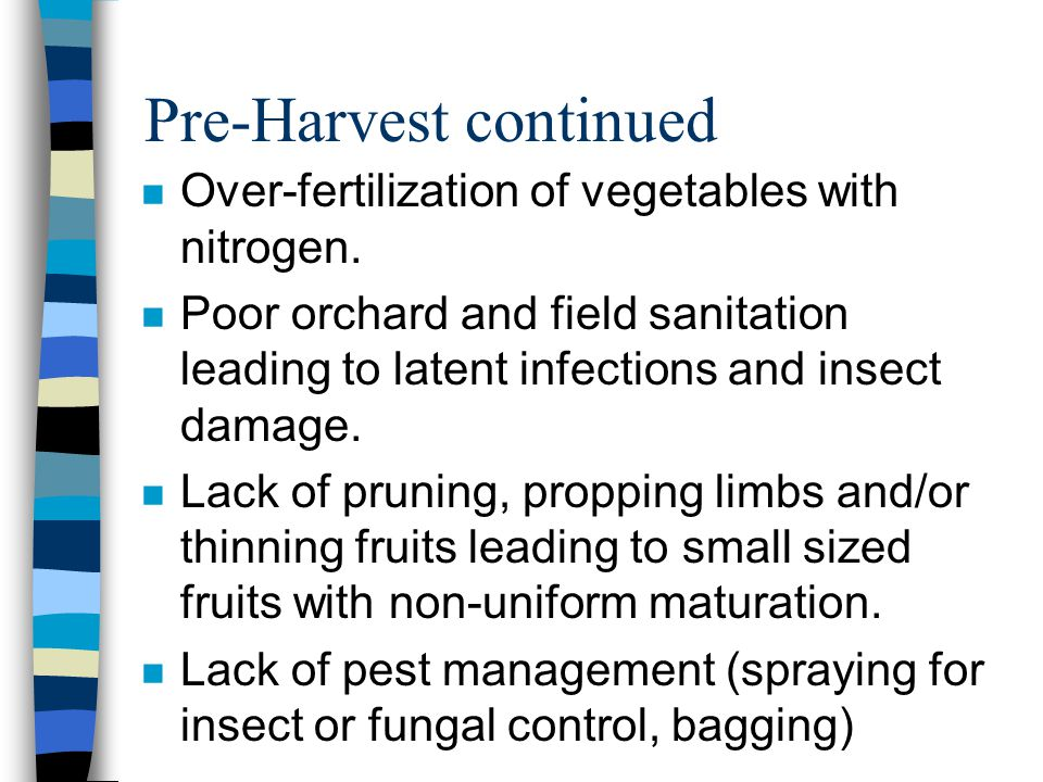 Pre-Harvest continued Over-fertilization of vegetables with nitrogen. Poor orchard and field sanitation leading to latent infections and insect damage