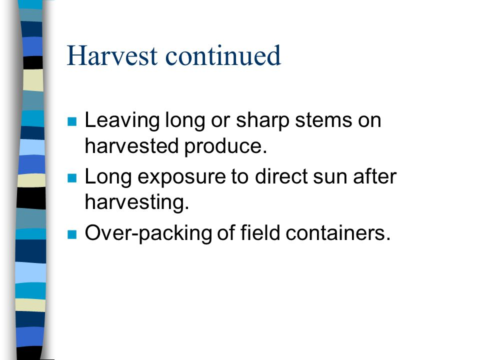 Curing Lack of curing or improper curing of root and tuber crops before postharvest handling, packing and storage.