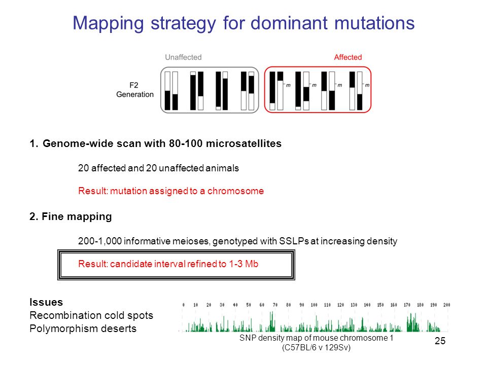 25 Mapping strategy for dominant mutations 1.