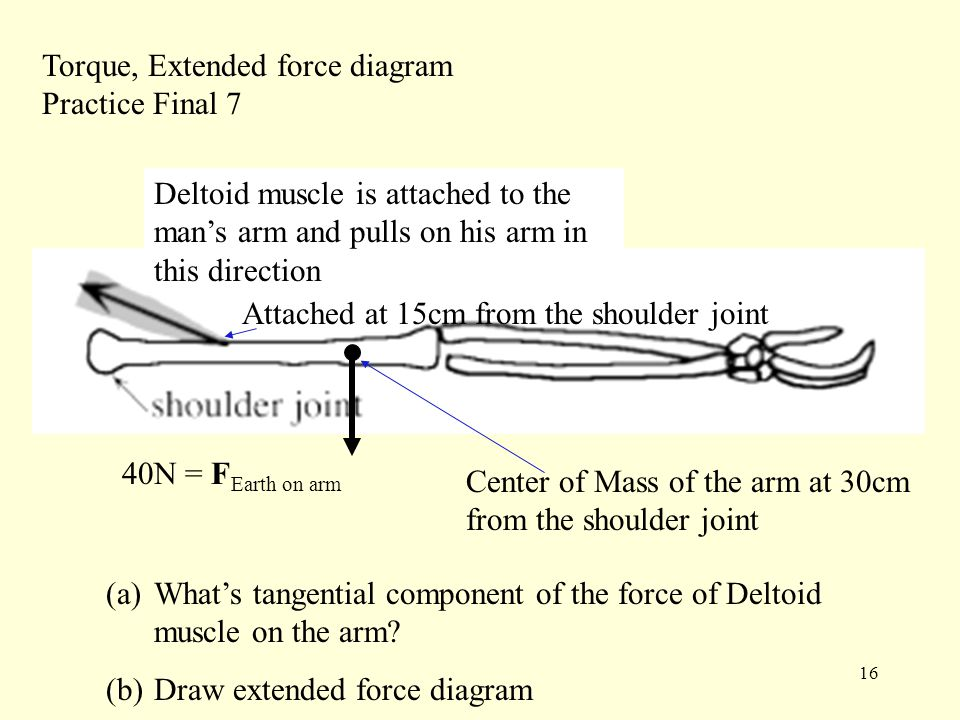 16 Torque, Extended force diagram Practice Final 7 Deltoid muscle is attached to the man's arm and pulls on his arm in this direction Attached at 15cm from the shoulder joint Center of Mass of the arm at 30cm from the shoulder joint 40N = F Earth on arm (a)What's tangential component of the force of Deltoid muscle on the arm.