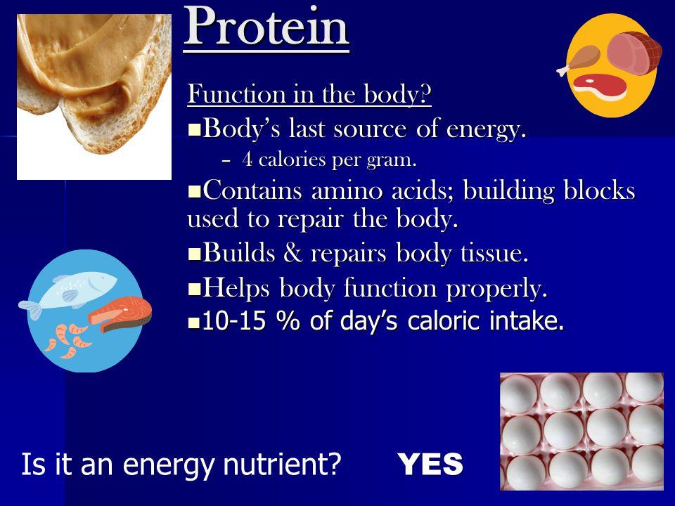 Protein Function in the body? Body's last source of energy. Body's last source of energy. –4 calories per gram. Contains amino acids; building blocks