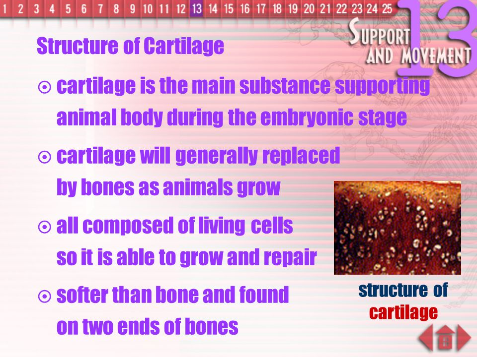 Describe the nature of bone after strong heating. Ans: The bone becomes brittle. dilute hydrochloric acid chicken bone