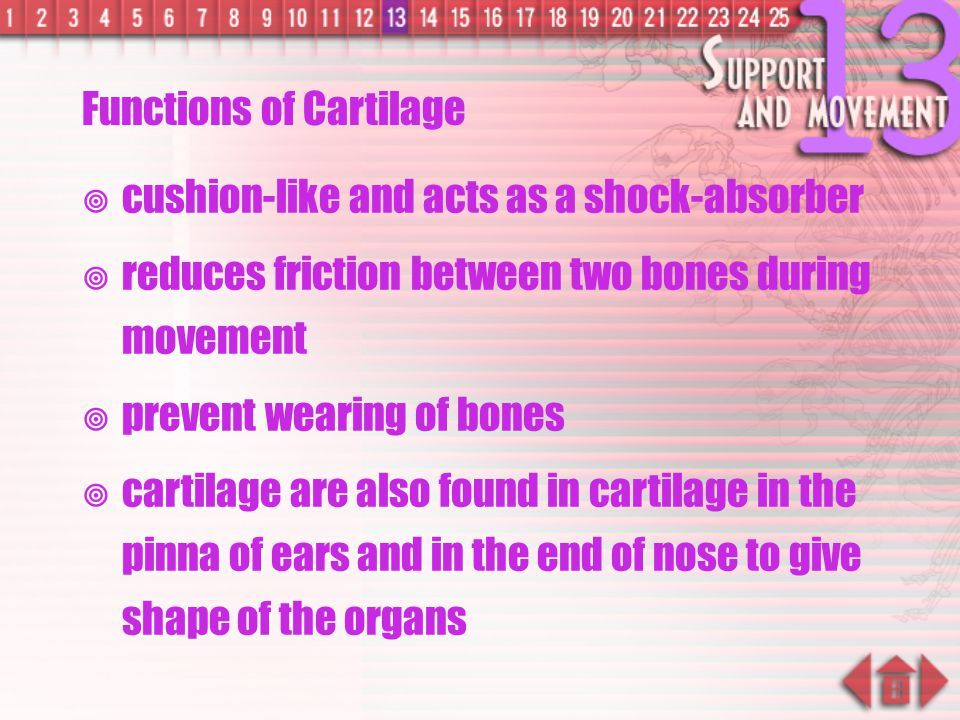 Structure of Cartilage structure of cartilage  cartilage is the main substance supporting animal body during the embryonic stage  cartilage will gen
