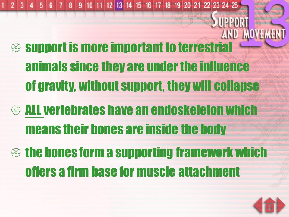 Why do Organisms need Skeletons?  enable organisms to support and carry weight of their bodies and that structure involved in vertebrates is skeleton