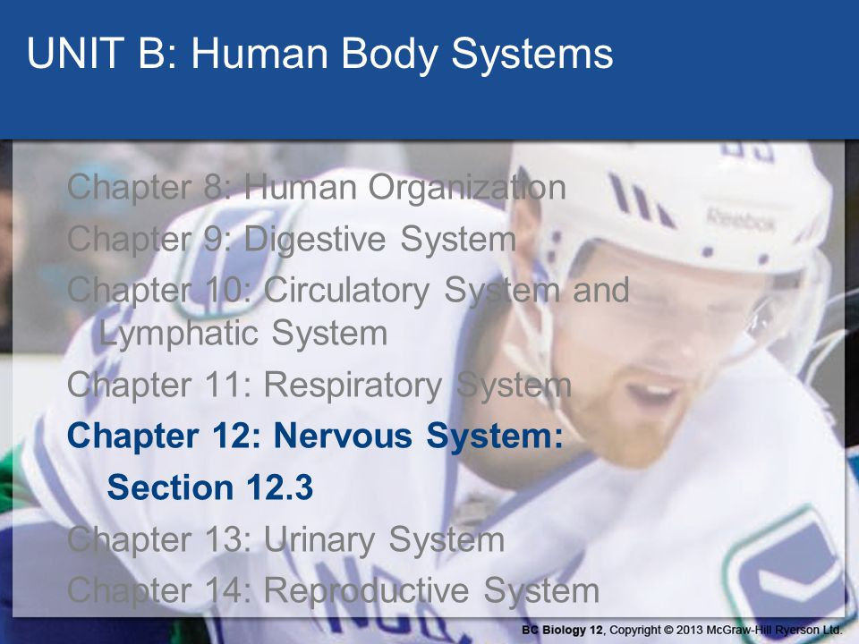 UNIT B: Human Body Systems Chapter 8: Human Organization Chapter 9: Digestive System Chapter 10: Circulatory System and Lymphatic System Chapter 11: R