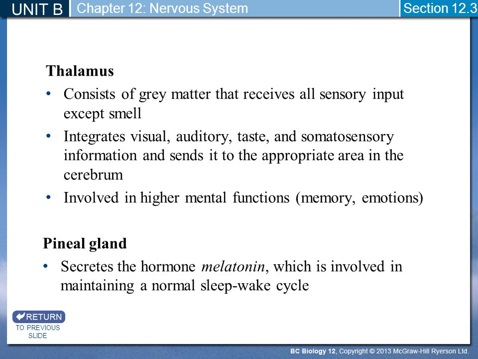 Thalamus Consists of grey matter that receives all sensory input except smell Integrates visual, auditory, taste, and somatosensory information and se