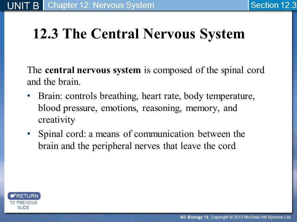 12.3 The Central Nervous System The central nervous system is composed of the spinal cord and the brain. Brain: controls breathing, heart rate, body t