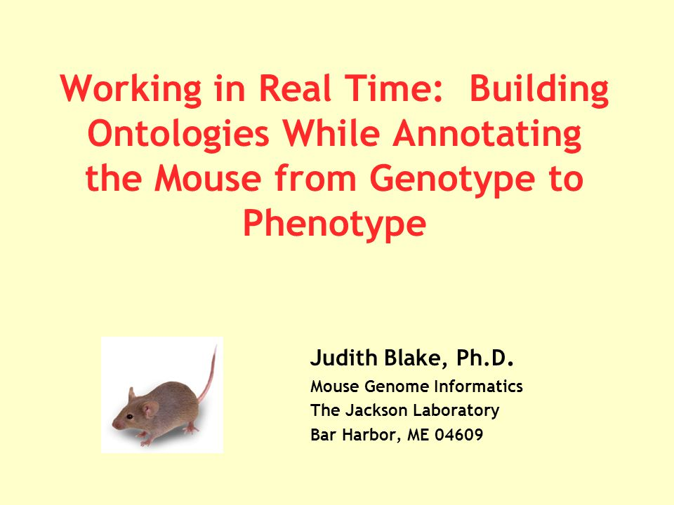 Working in Real Time: Building Ontologies While Annotating the Mouse from Genotype to Phenotype Judith Blake, Ph.D.