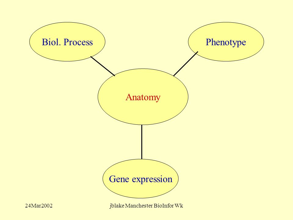 24Mar2002jblake Manchester BioInfor Wk Biol. Process Anatomy Phenotype Gene expression