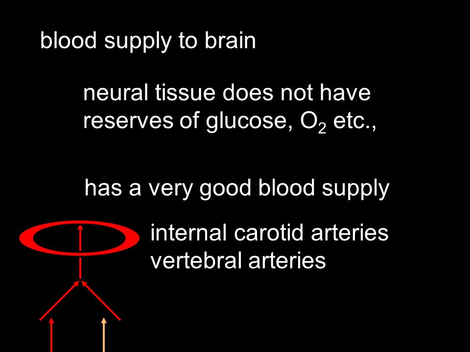 blood supply to brain neural tissue does not have reserves of glucose, O 2 etc., has a very good blood supply internal carotid arteries vertebral arteries