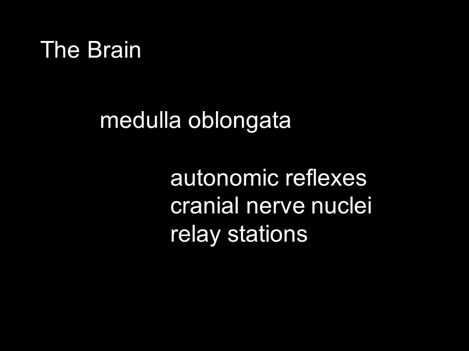 The Brain medulla oblongata autonomic reflexes cranial nerve nuclei relay stations