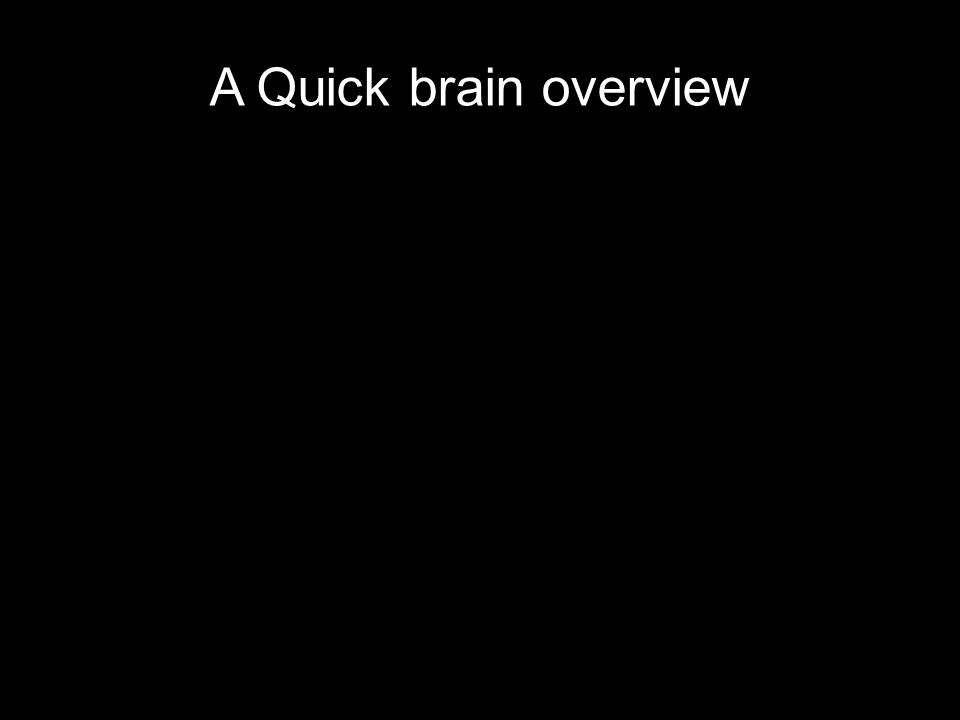 A Quick brain overview
