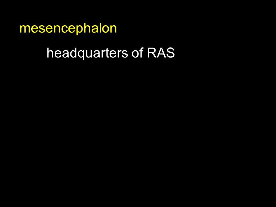 headquarters of RAS mesencephalon