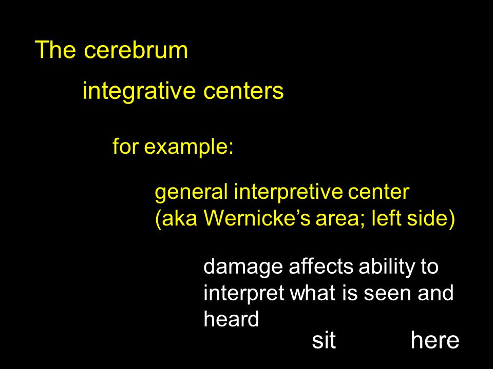 integrative centers The cerebrum for example: general interpretive center (aka Wernicke's area; left side) damage affects ability to interpret what is seen and heard sithere