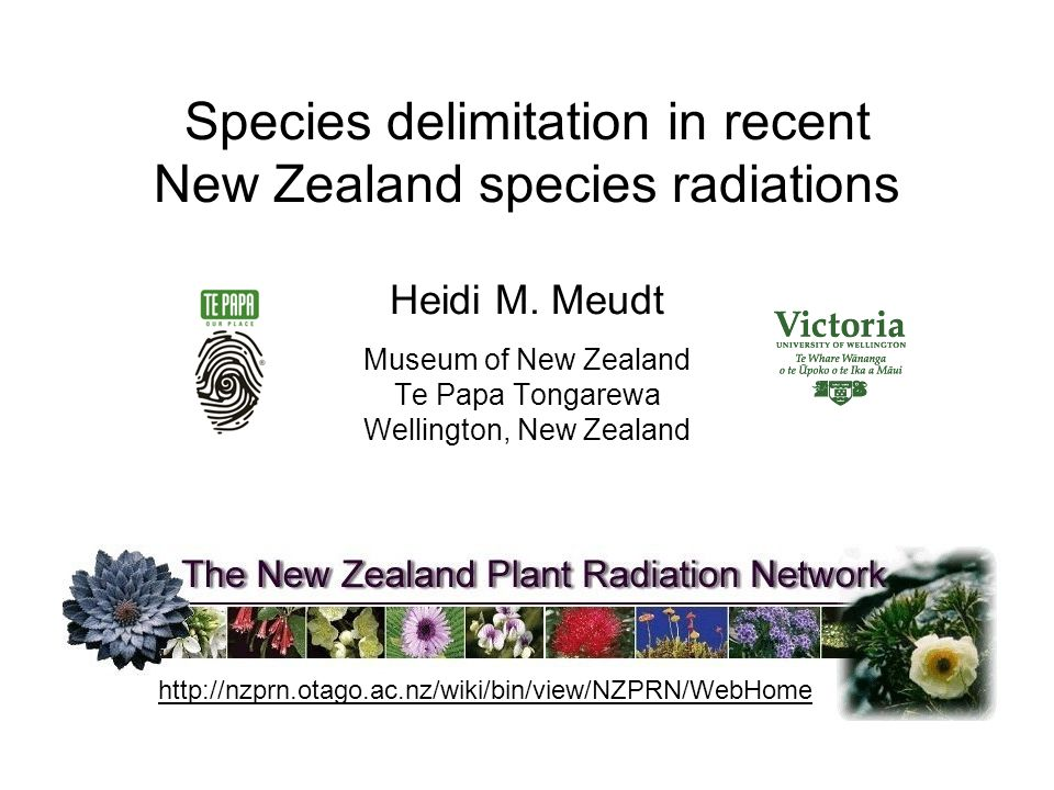 Species delimitation in recent New Zealand species radiations Heidi M.