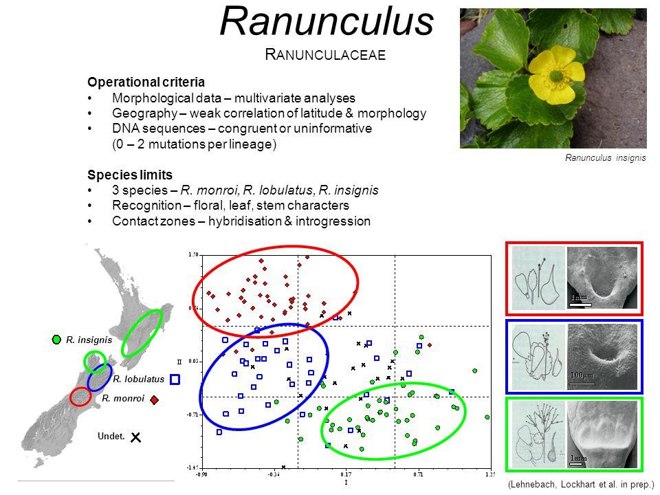 (Lehnebach, Lockhart et al. in prep.) 1mm 100μm 1mm Ranunculus R ANUNCULACEAE Operational criteria Morphological data – multivariate analyses Geograph