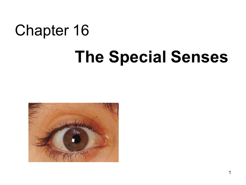 42 Visual pathways Green is area seen by both eyes, and is the area of stereoscopic vision At optic chiasm, medial fibers from each eye (which view lateral fields of vision) cross to opposite side of the brain.