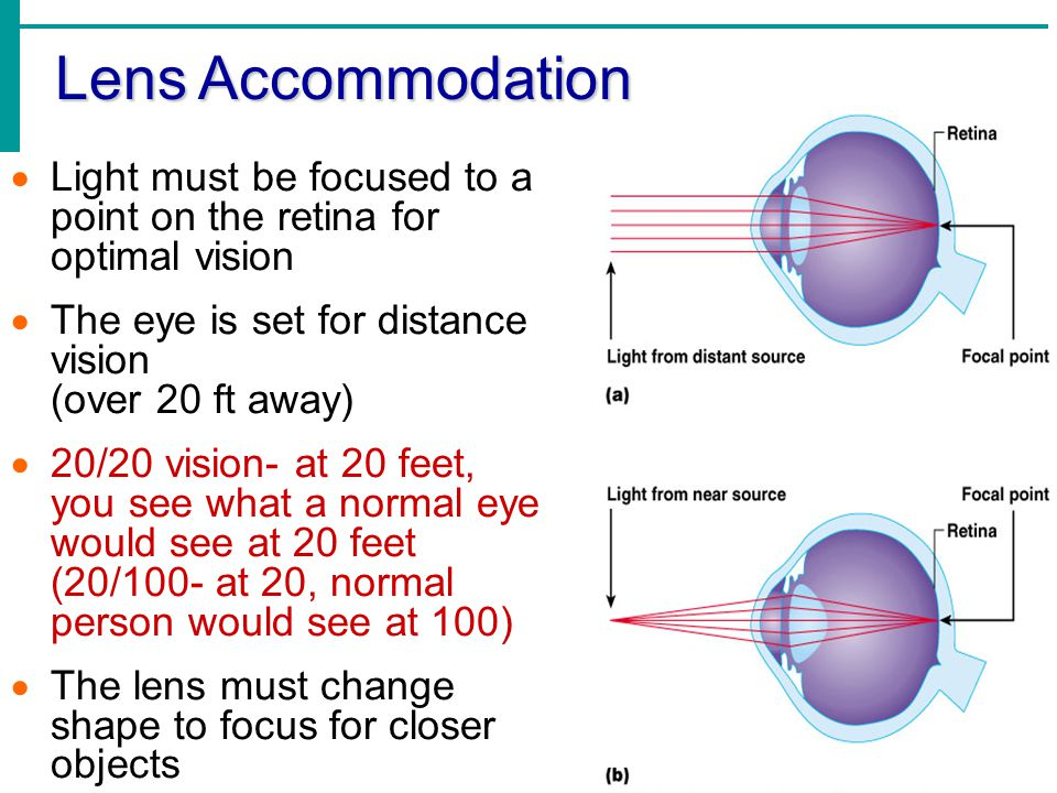 Lens Accommodation  Light must be focused to a point on the retina for optimal vision  The eye is set for distance vision (over 20 ft away)  20/20