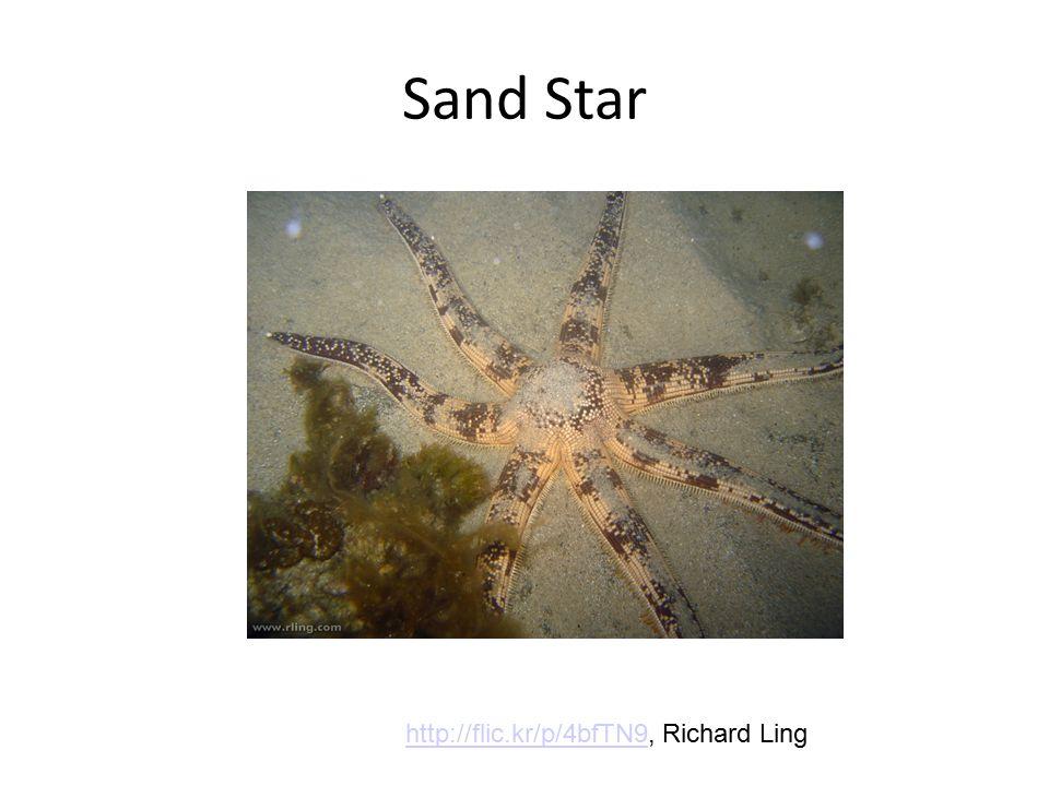 Sand Star http://flic.kr/p/4bfTN9http://flic.kr/p/4bfTN9, Richard Ling