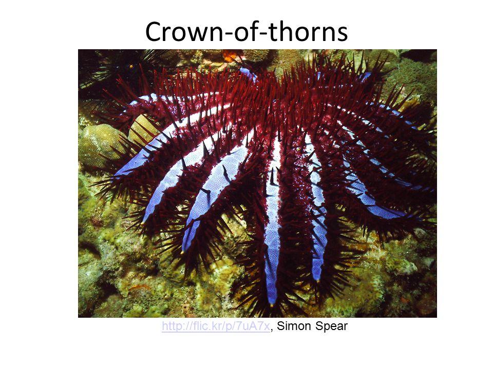 Crown-of-thorns http://flic.kr/p/7uA7xhttp://flic.kr/p/7uA7x, Simon Spear