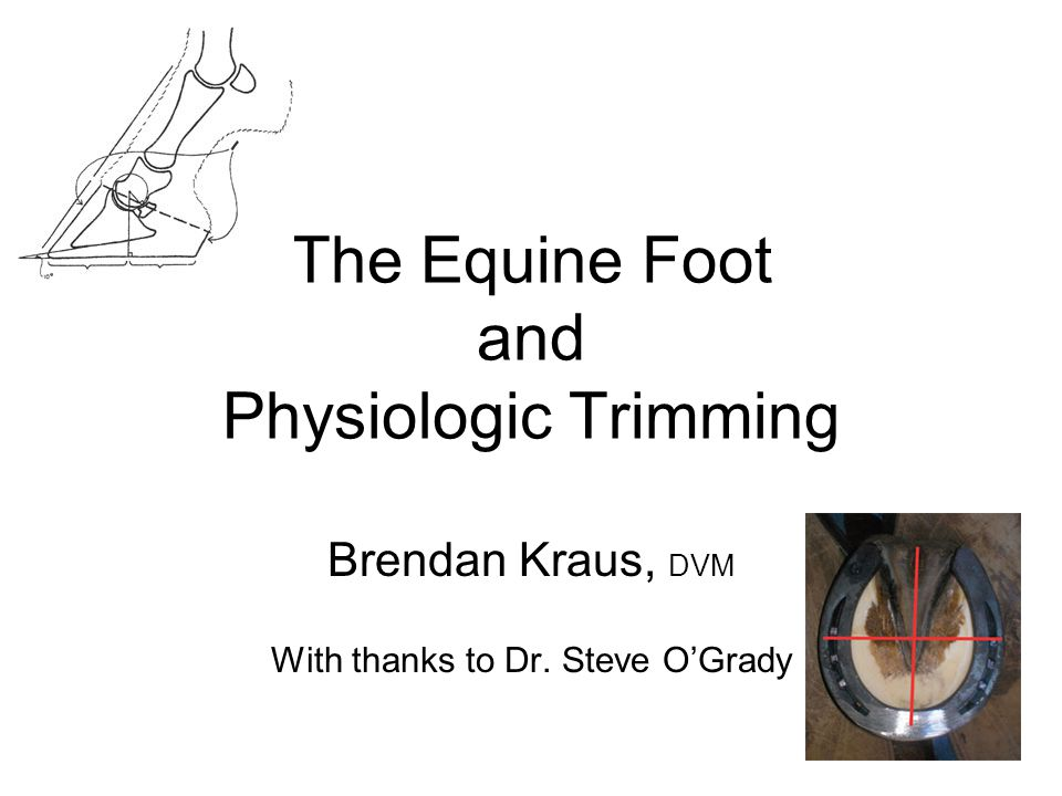 The Equine Foot and Physiologic Trimming Brendan Kraus, DVM With thanks to Dr. Steve O'Grady