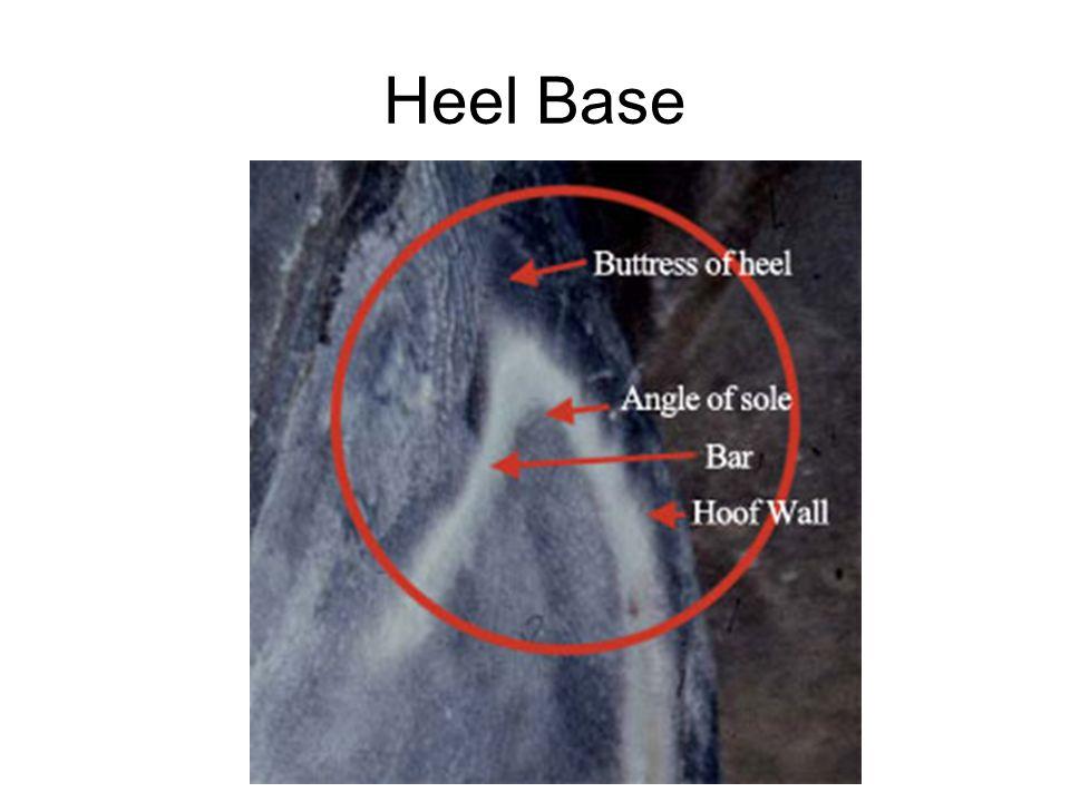 Heel Base