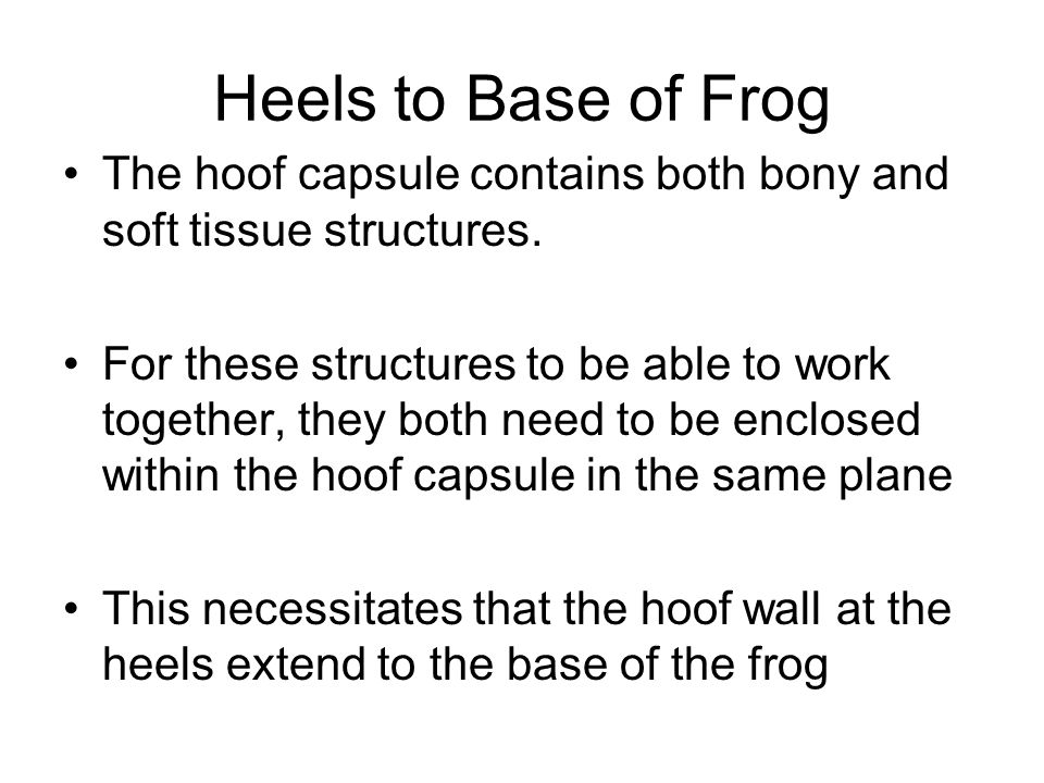 Heels to Base of Frog The hoof capsule contains both bony and soft tissue structures. For these structures to be able to work together, they both need