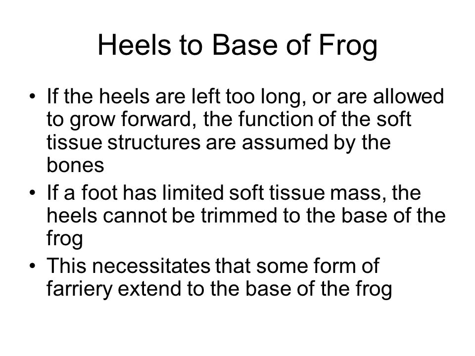 Heels to Base of Frog If the heels are left too long, or are allowed to grow forward, the function of the soft tissue structures are assumed by the bo