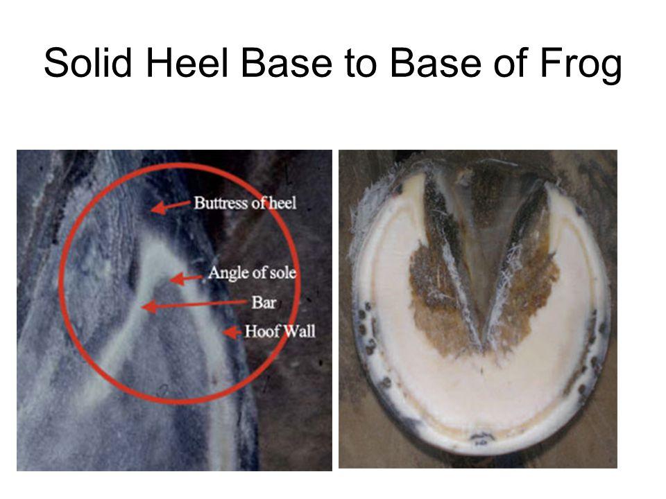 Solid Heel Base to Base of Frog