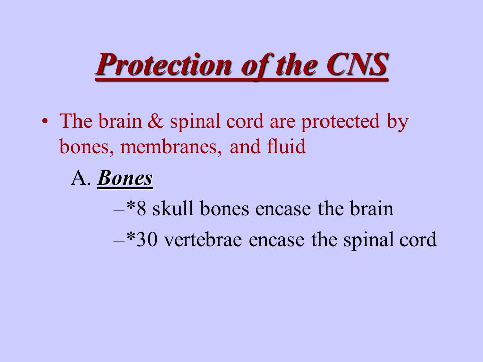 Protection of the CNS Bones Meninges