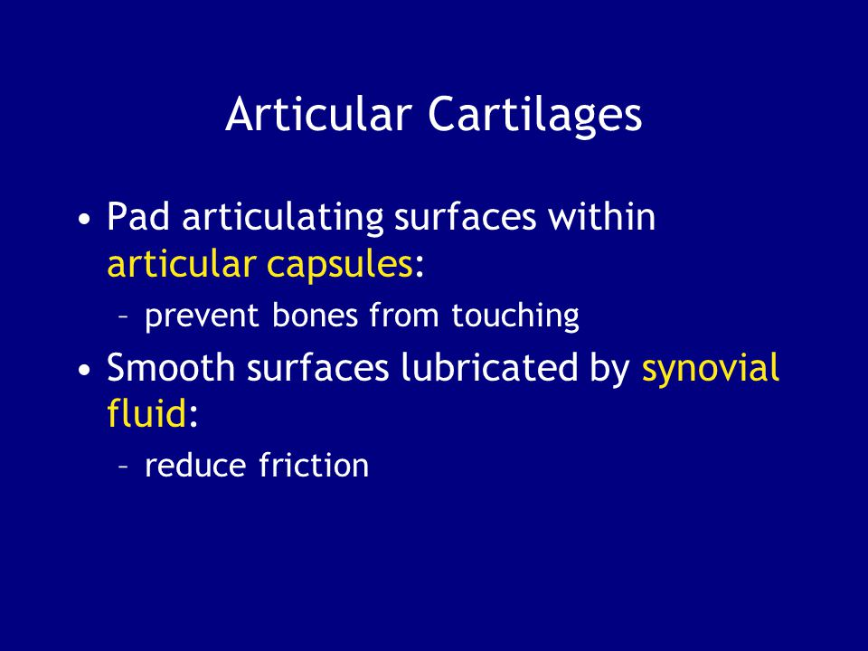 Articular Cartilages Pad articulating surfaces within articular capsules: –prevent bones from touching Smooth surfaces lubricated by synovial fluid: –