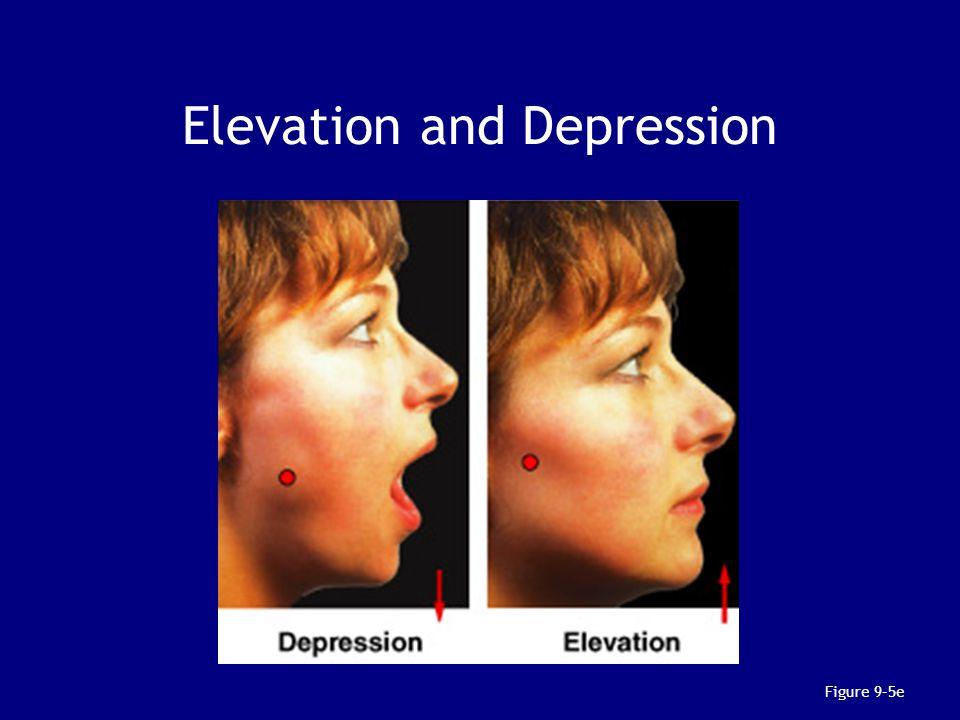 Elevation and Depression Figure 9–5e