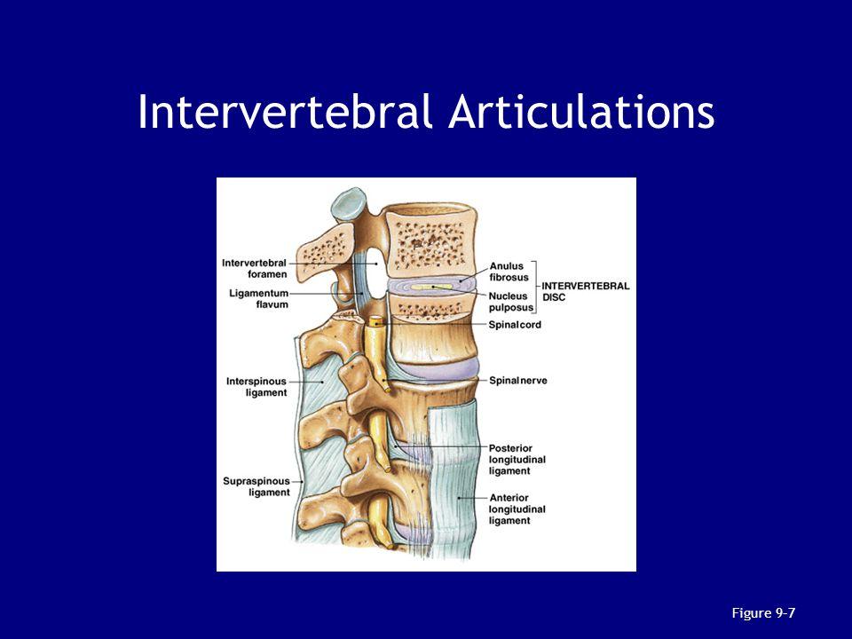 Intervertebral Articulations Figure 9–7