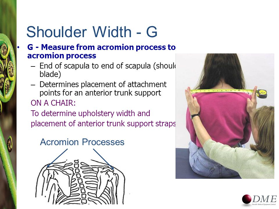 G - Measure from acromion process to acromion process – End of scapula to end of scapula (shoulder blade) – Determines placement of attachment points for an anterior trunk support ON A CHAIR: To determine upholstery width and placement of anterior trunk support straps Shoulder Width - G Acromion Processes