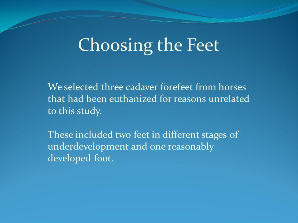 Foot 1 Foot 2 Foot 3