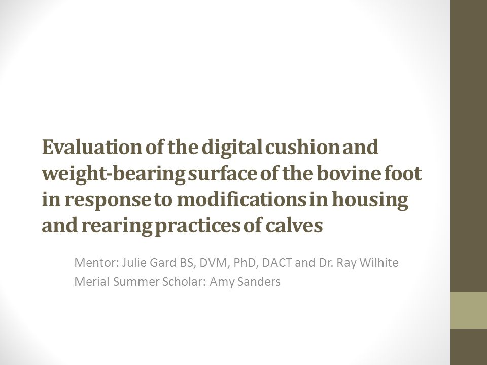 Evaluation of the digital cushion and weight-bearing surface of the bovine foot in response to modifications in housing and rearing practices of calves Mentor: Julie Gard BS, DVM, PhD, DACT and Dr.