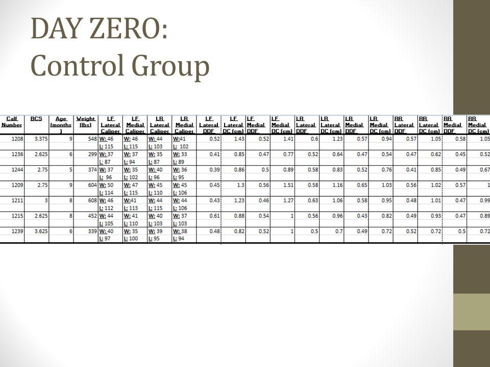 DAY ZERO: Control Group