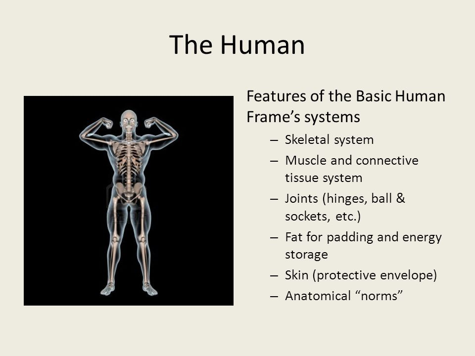 The Human Features of the Basic Human Frame's systems – Skeletal system – Muscle and connective tissue system – Joints (hinges, ball & sockets, etc.) – Fat for padding and energy storage – Skin (protective envelope) – Anatomical norms