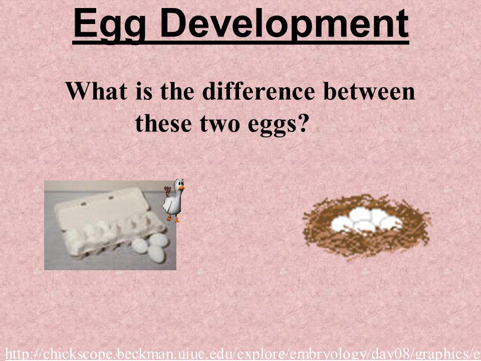 (B) Internal Development Development occurs inside the female Three types: 1. Placental mammals 2. Marsupials 3. Monotremes