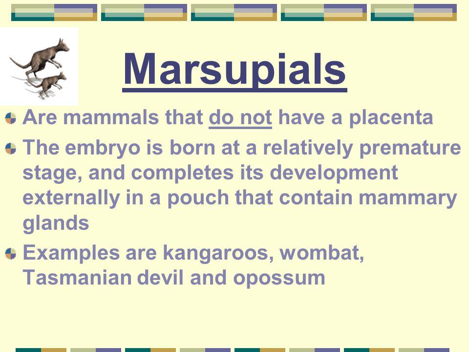 (B) Internal Development Development occurs inside the female Three types: 1. Marsupials 2. Monotremes 3. Placental mammals